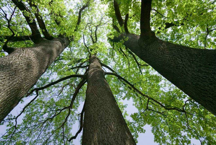 tre alberi