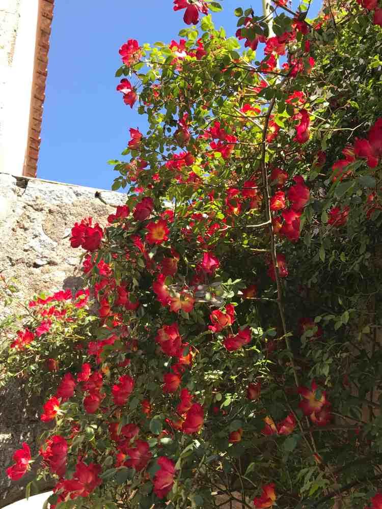colori di casa rosso con muro