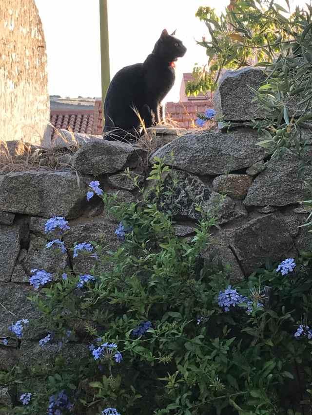 gatto Fillo sul muro del giardino